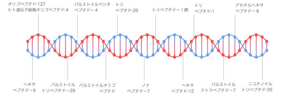 パーフェクトアンプルに含まれた 13種のペプチドとは人体のタンパク質構成要素であるアミノ酸重合体で、原料の違いが肌の違いを作り出します。